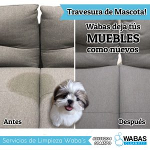 Post-travesura-mascota.jpg